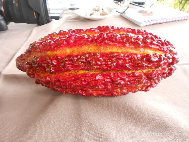 Cacao Seed Pod -- I Love Chocolate