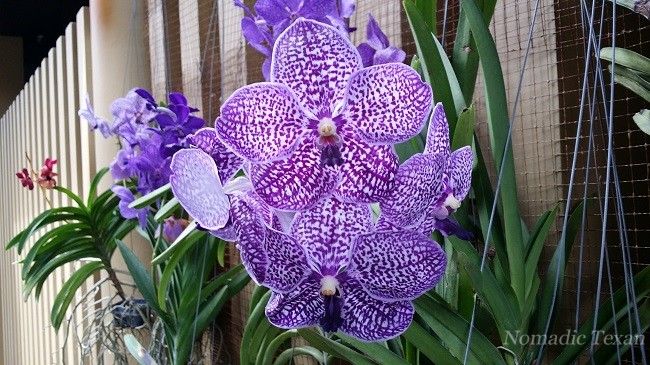 An Amazing Purple Orchid