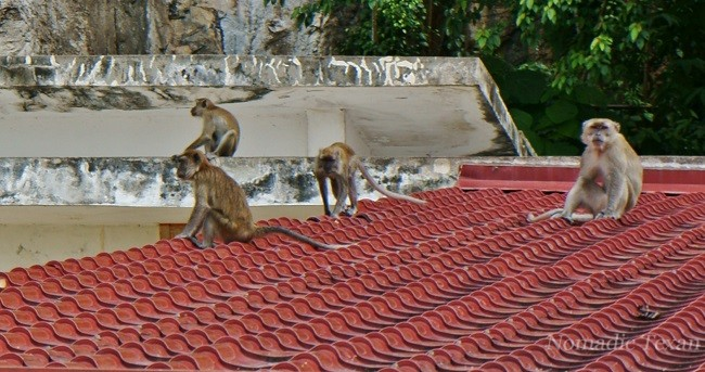 Monkeys Watching the Toilet at The Batu Caves
