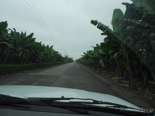 Entry of the Banana Plantation