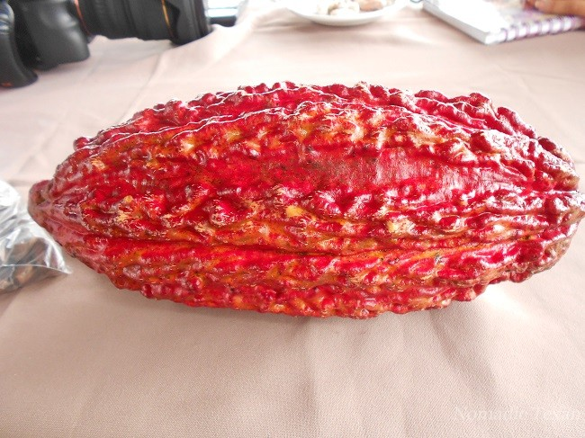 Red Ripe Cacao SeedPod